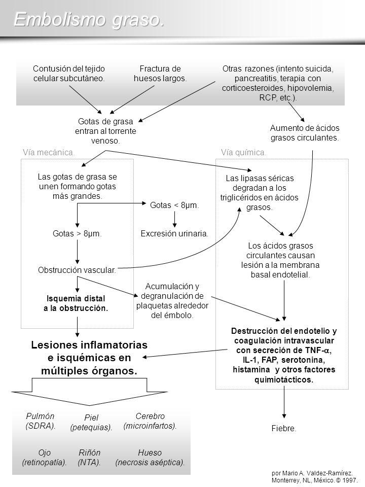 Lesiones inflamatorias e isquémicas en múltiples órganos.