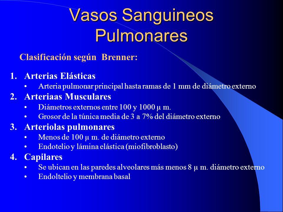 Vasos Sanguineos Pulmonares