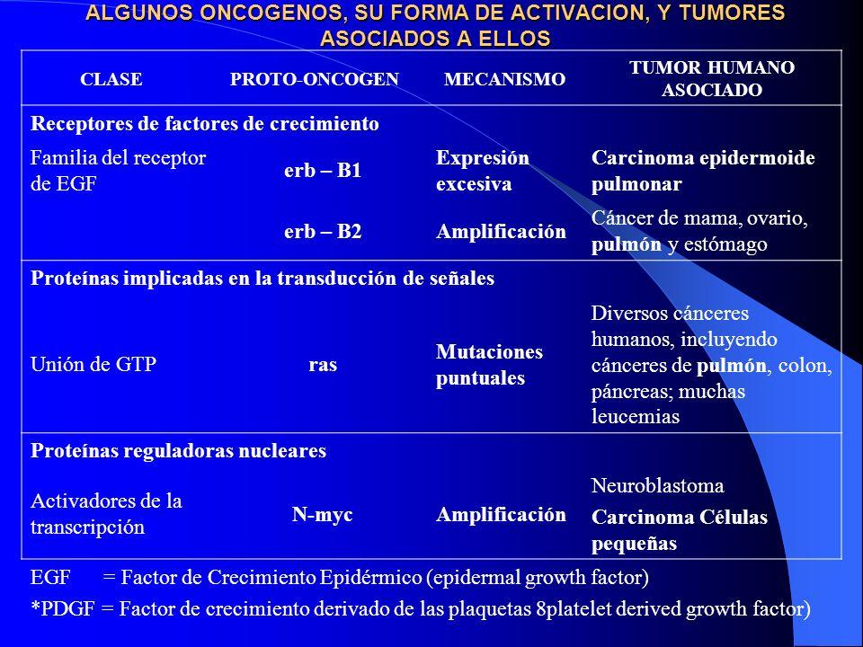 ALGUNOS ONCOGENOS, SU FORMA DE ACTIVACION, Y TUMORES ASOCIADOS A ELLOS