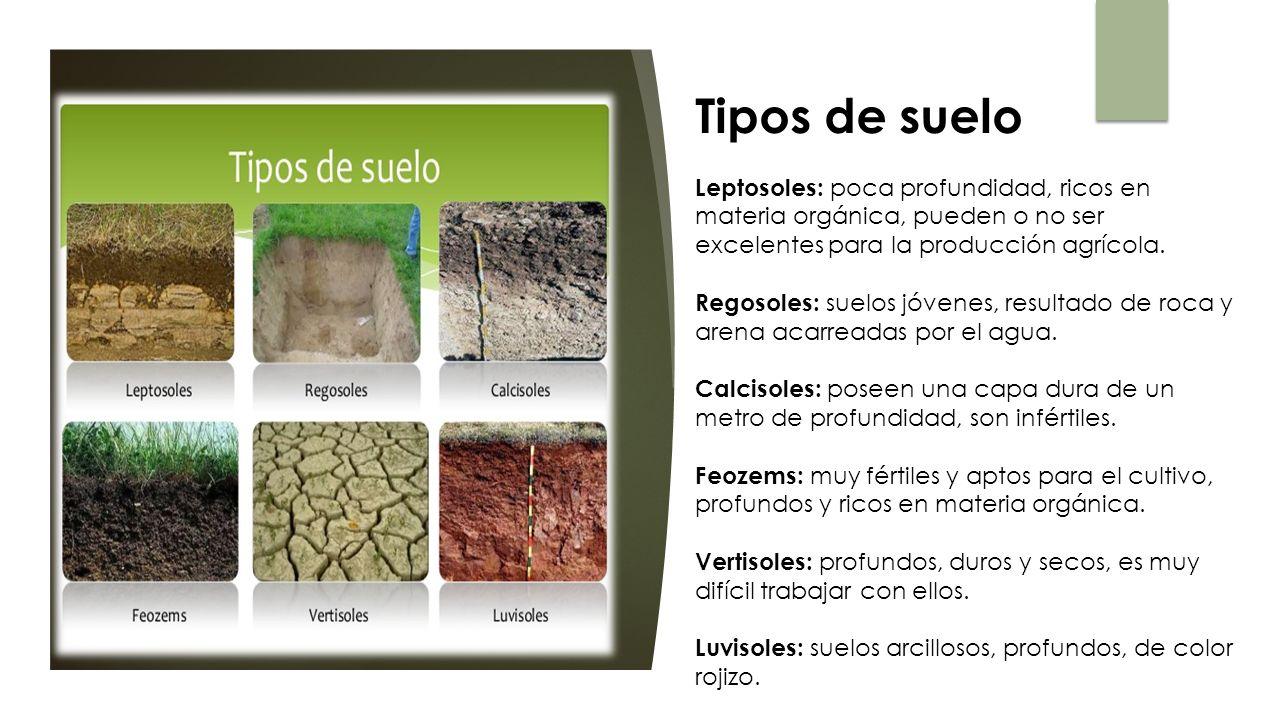 Atmosfera y prevencion y control de la contaminacion del for Suelos y tipos de suelos