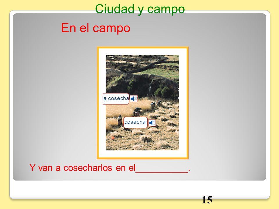 Ciudad y campo En el campo 15 Y van a cosecharlos en el__________.