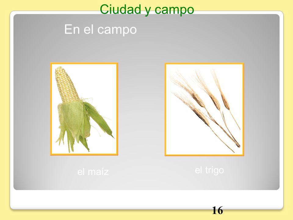 Ciudad y campo En el campo el maíz el trigo 16