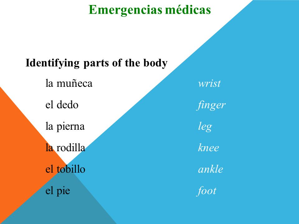 Emergencias médicas Vocabulario Identifying parts of the body