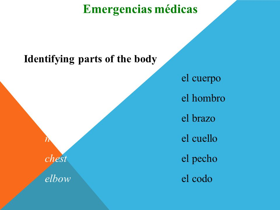 Emergencias médicas Vocabulario Identifying parts of the body body