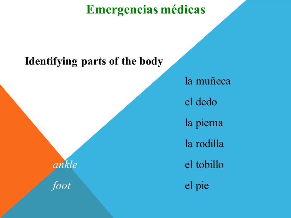 Emergencias médicas Vocabulario Identifying parts of the body wrist