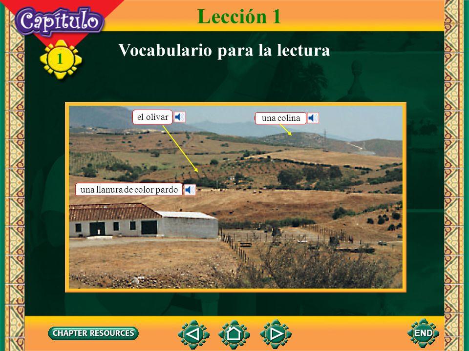 Lección 1 Vocabulario para la lectura el olivar una colina