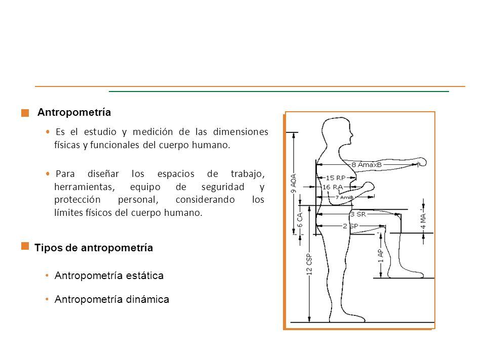 Ergonomia ing dorinha castro ppt descargar for Antropometria estatica