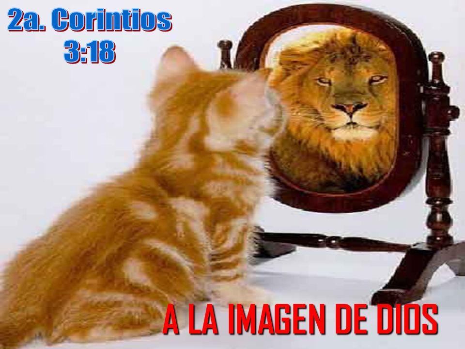 2a. Corintios 3:18 A LA IMAGEN DE DIOS