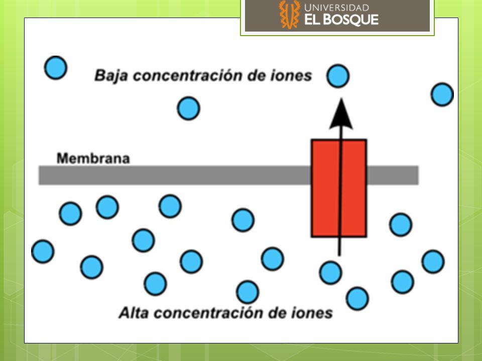Fuerza de difusión: dada por la carga electrica, energia electrostatica