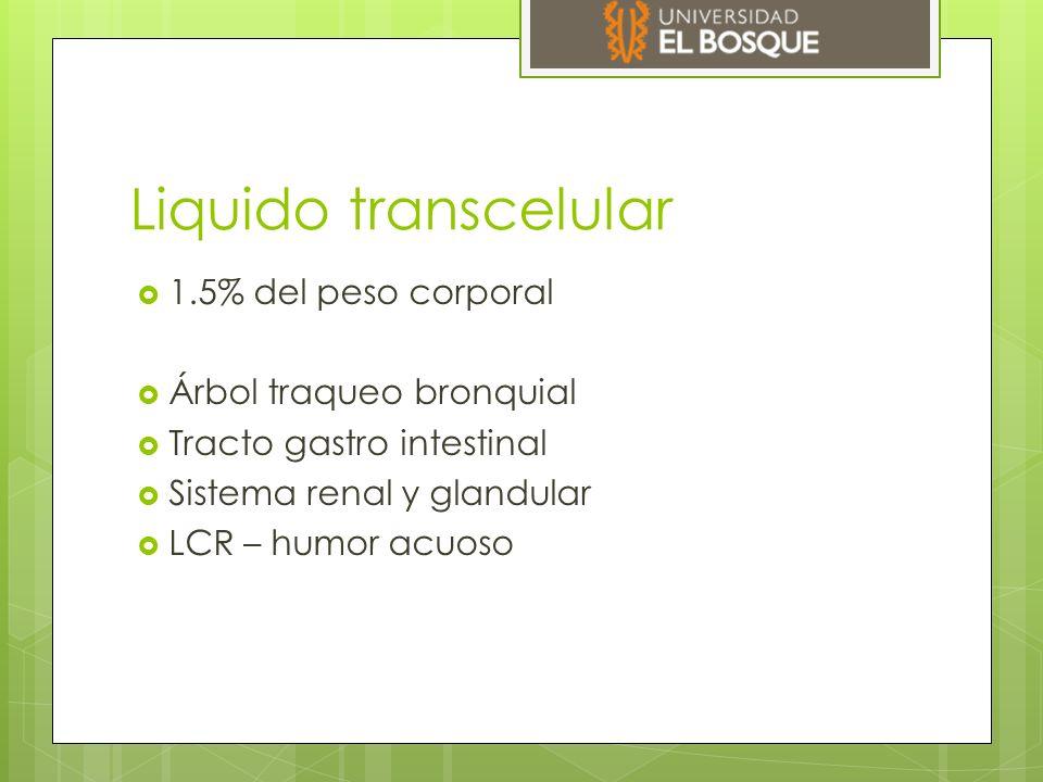 Liquido transcelular 1.5% del peso corporal Árbol traqueo bronquial