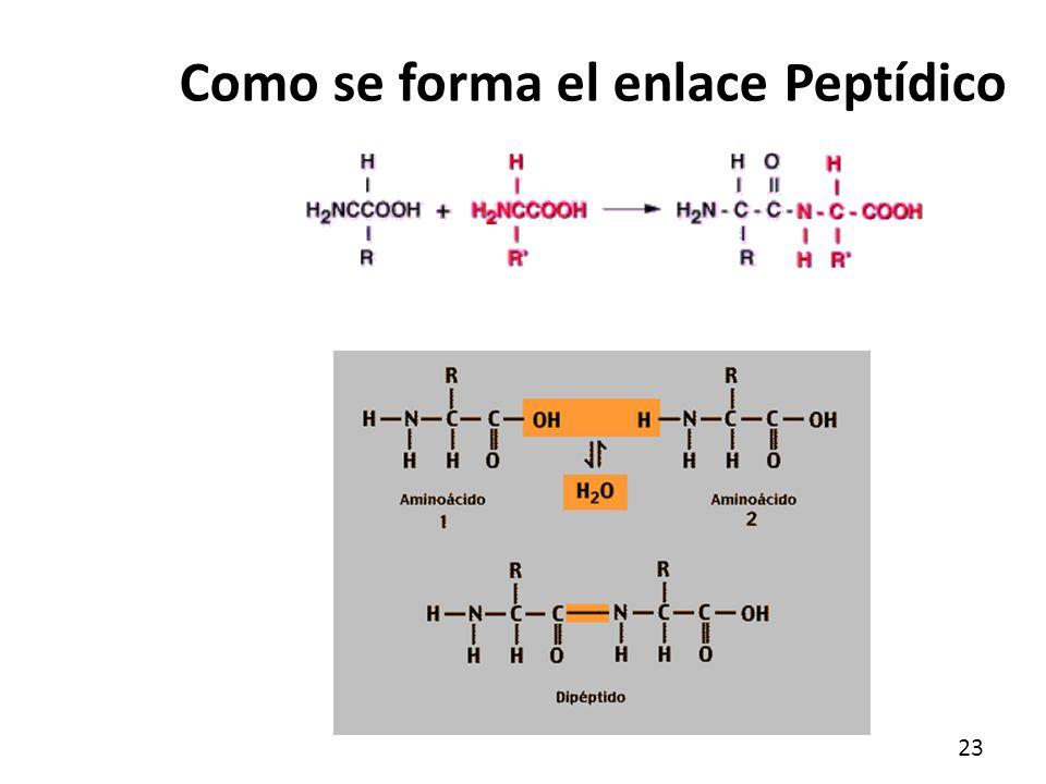 Amino cidos y p ptidos ppt video online descargar for Como se extrae el marmol