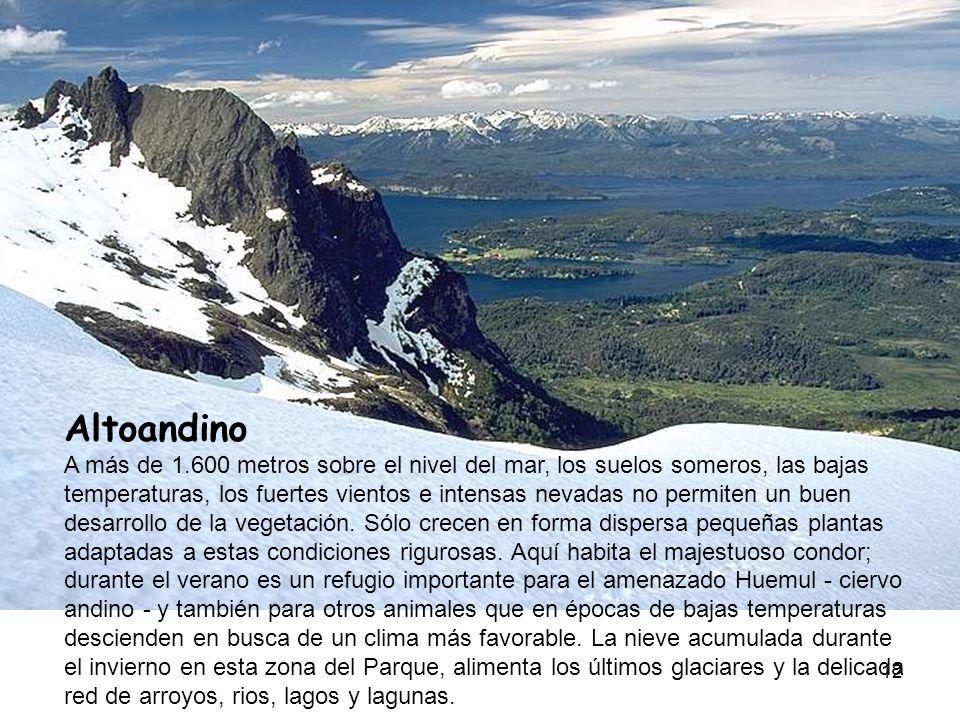 Altoandino A más de 1.600 metros sobre el nivel del mar, los suelos someros, las bajas temperaturas, los fuertes vientos e intensas nevadas no permiten un buen desarrollo de la vegetación.