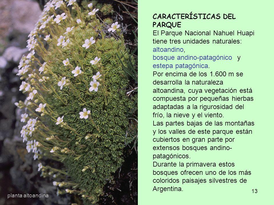 CARACTERÍSTICAS DEL PARQUE El Parque Nacional Nahuel Huapi tiene tres unidades naturales: altoandino, bosque andino-patagónico y estepa patagónica. Por encima de los 1.600 m se desarrolla la naturaleza altoandina, cuya vegetación está compuesta por pequeñas hierbas adaptadas a la rigurosidad del frío, la nieve y el viento. Las partes bajas de las montañas y los valles de este parque están cubiertos en gran parte por extensos bosques andino-patagónicos. Durante la primavera estos bosques ofrecen uno de los más coloridos paisajes silvestres de Argentina.
