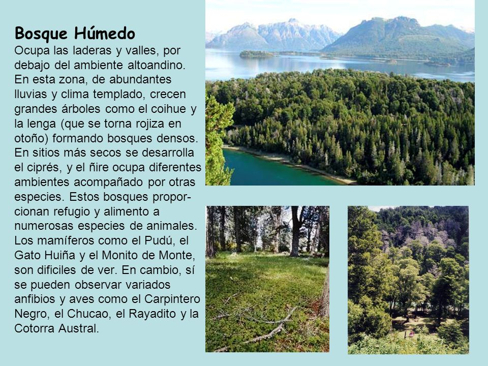 Bosque Húmedo Ocupa las laderas y valles, por debajo del ambiente altoandino.