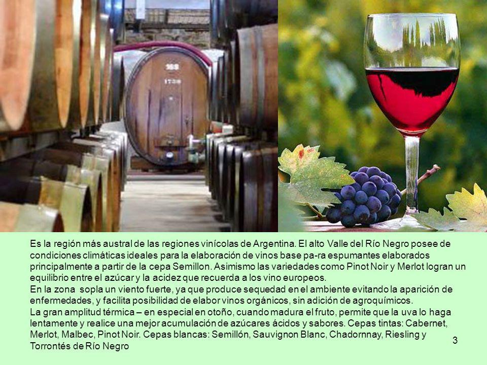 Cepas tintas: Cabernet, Merlot, Malbec, Pinot Noir.