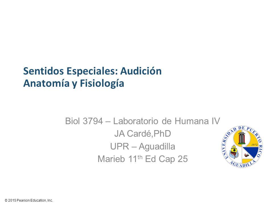 Fantástico Anatomía Y Fisiología Sentidos Especiales Friso ...