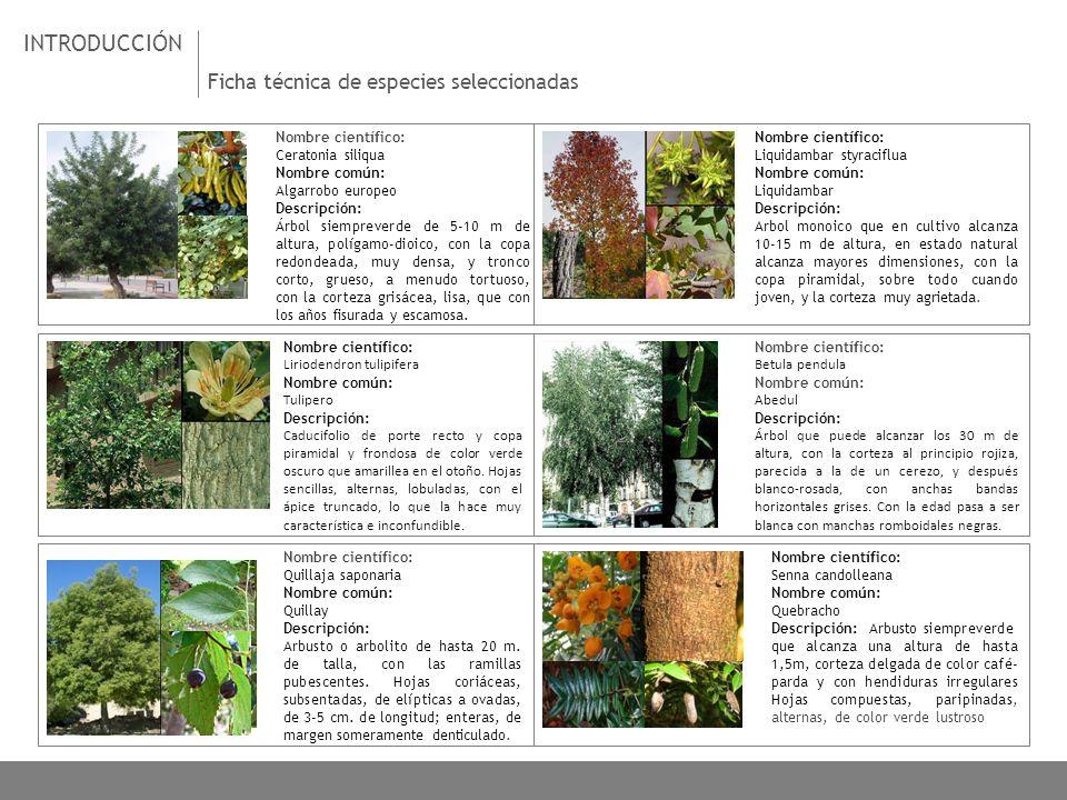 Introducci n ficha t cnica de especies seleccionadas ppt - Especies de arbustos ...