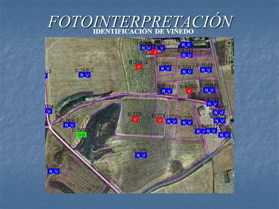 FOTOINTERPRETACIÓN IDENTIFICACIÓN DE VIÑEDO