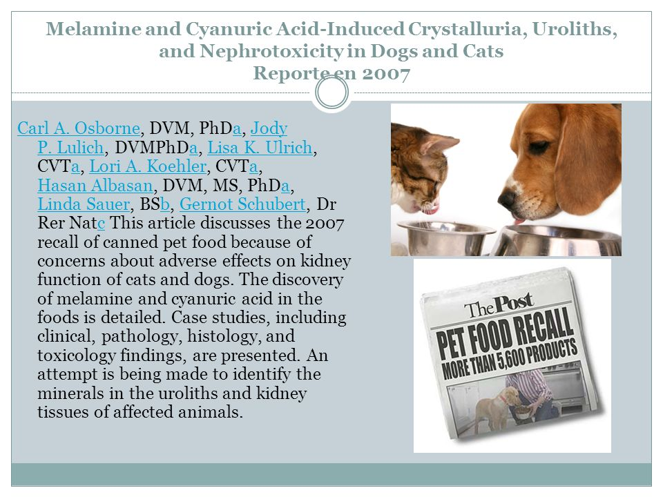 Melamine and Cyanuric Acid-Induced Crystalluria, Uroliths, and Nephrotoxicity in Dogs and Cats Reporte en 2007