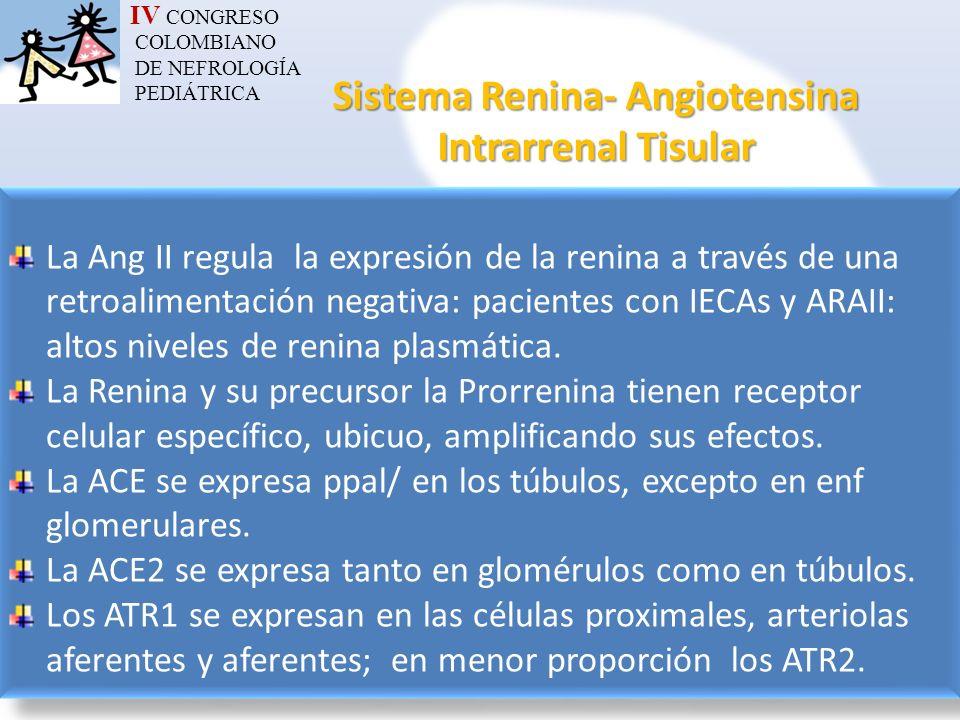 Sistema Renina- Angiotensina Intrarrenal Tisular