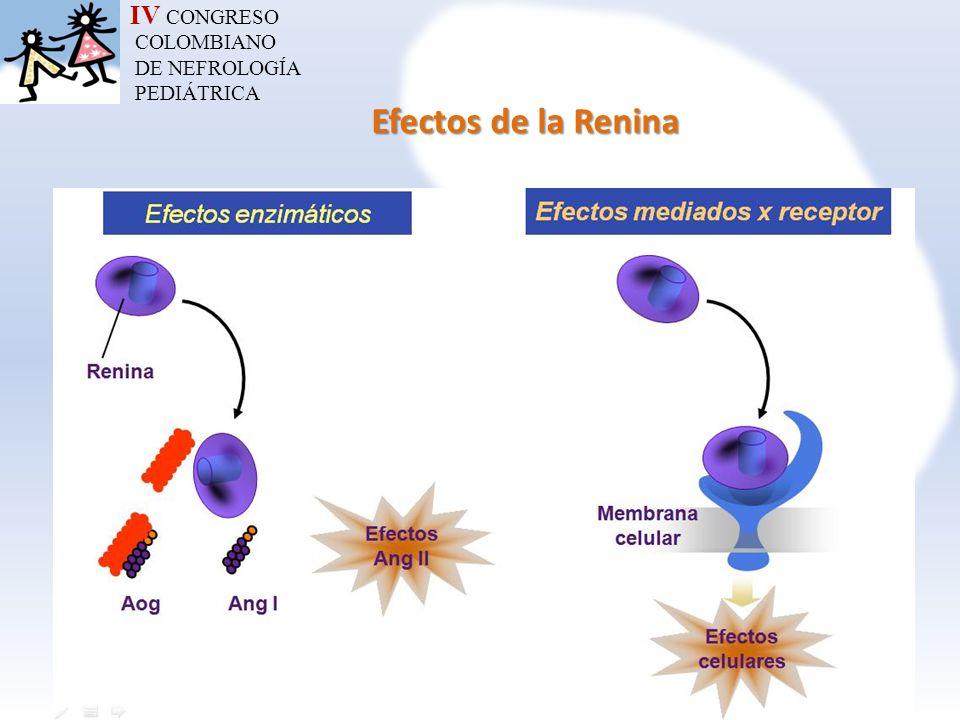 IV CONGRESO COLOMBIANO DE NEFROLOGÍA PEDIÁTRICA Efectos de la Renina
