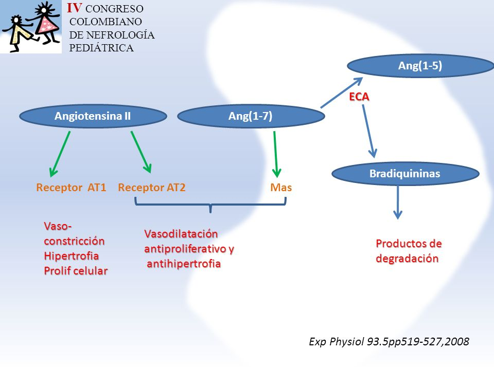 IV CONGRESO Ang(1-5) ECA Angiotensina II Ang(1-7) Bradiquininas