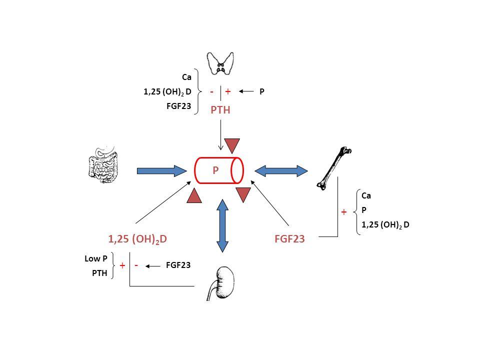 1,25 (OH)2D FGF23 PTH P Ca 1,25 (OH)2 D + - Low P