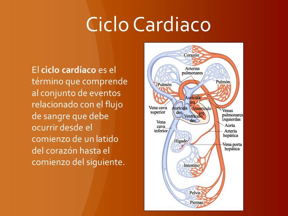 Encantador Anatomía Macroscópica Del Hígado Bandera - Imágenes de ...