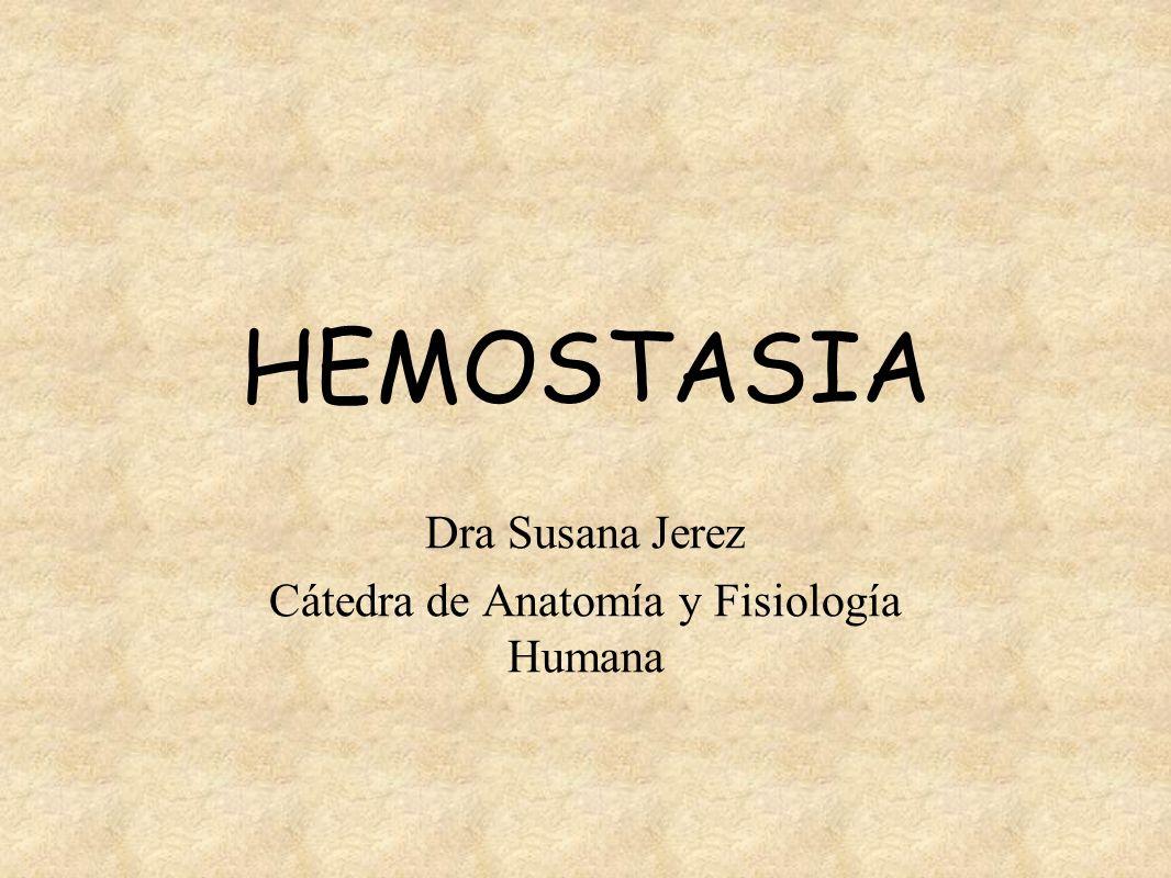 Dra Susana Jerez Cátedra de Anatomía y Fisiología Humana - ppt video ...