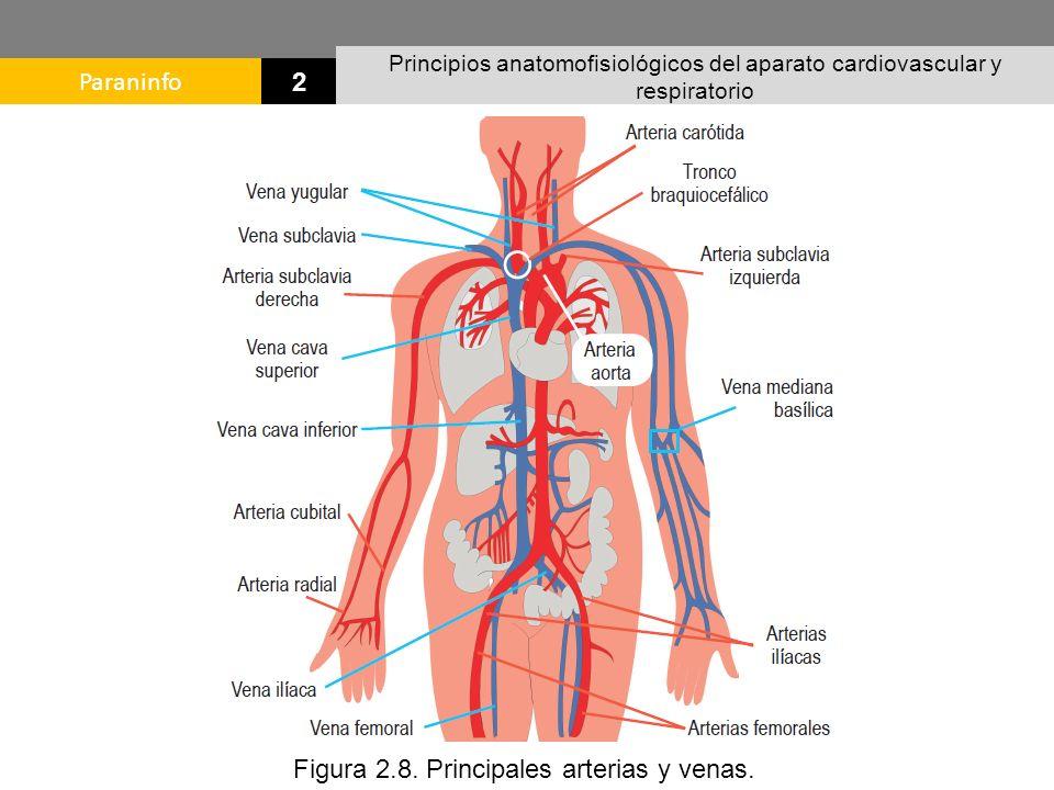 Excelente Diagrama Arteria Regalo - Anatomía de Las Imágenesdel ...
