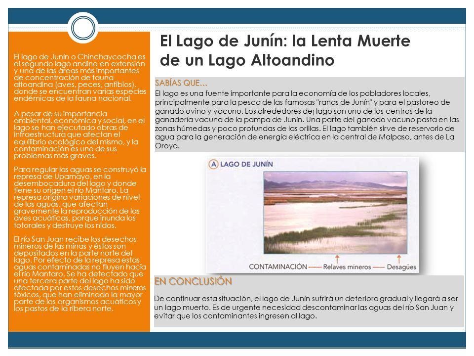 El Lago de Junín: la Lenta Muerte de un Lago Altoandino