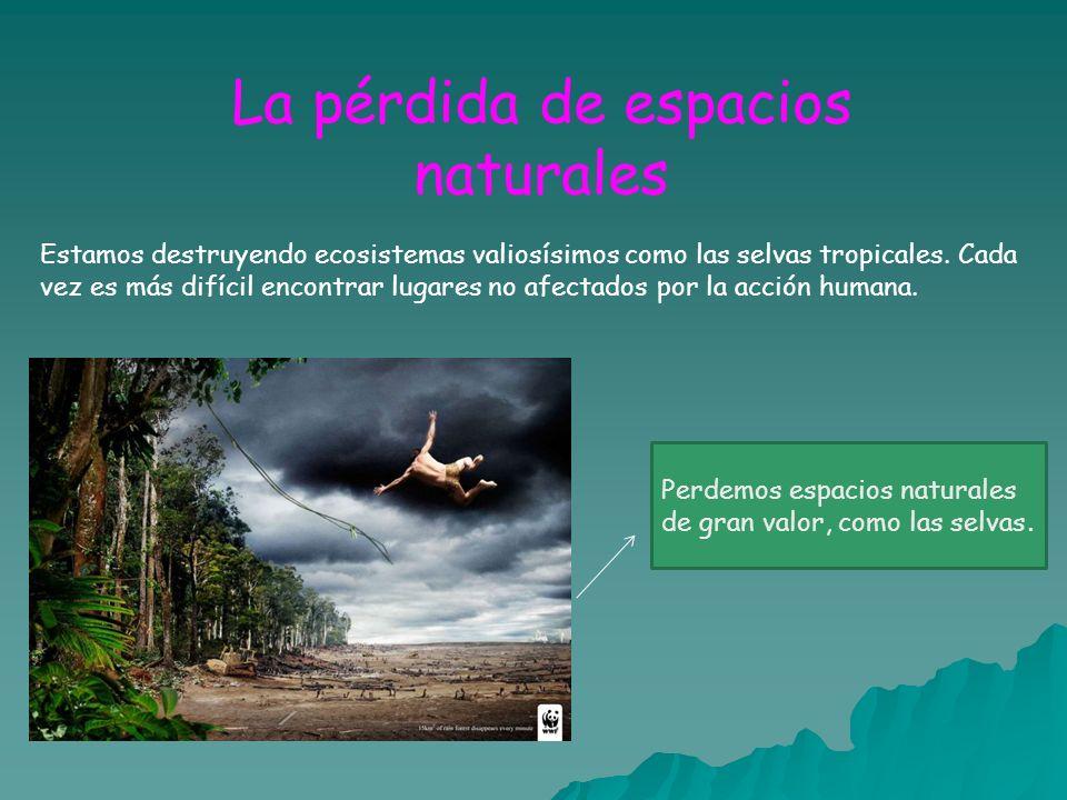 La pérdida de espacios naturales