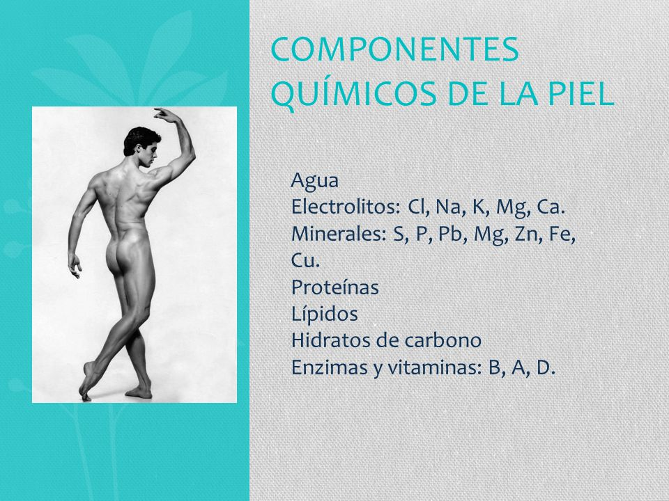 Componentes químicos de la piel