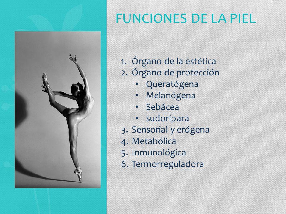 FUNCIONES DE LA PIEL Órgano de la estética Órgano de protección