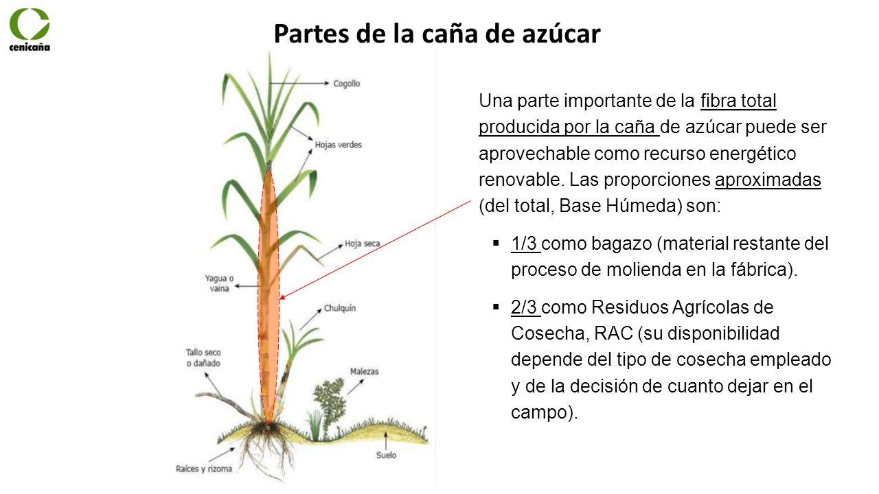 Programa procesos de f brica noviembre 11 de ppt descargar for En cuanto tiempo se cosecha la tilapia