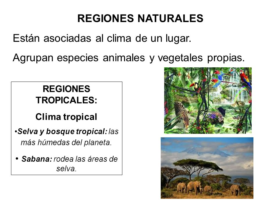 Están asociadas al clima de un lugar.