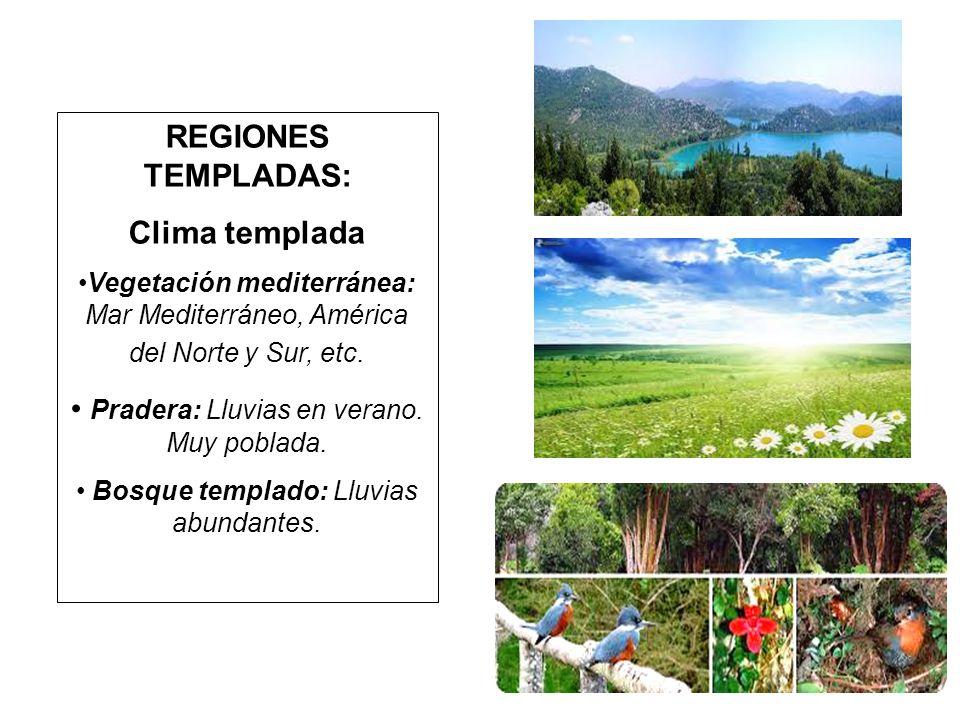 REGIONES TEMPLADAS: Clima templada