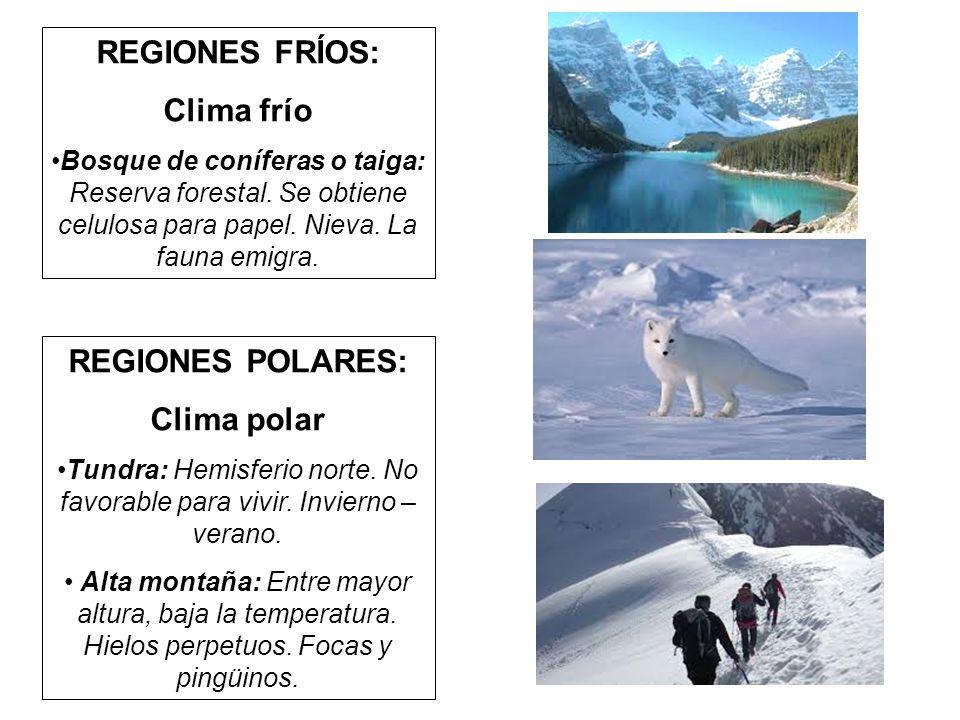 Tundra: Hemisferio norte. No favorable para vivir. Invierno – verano.