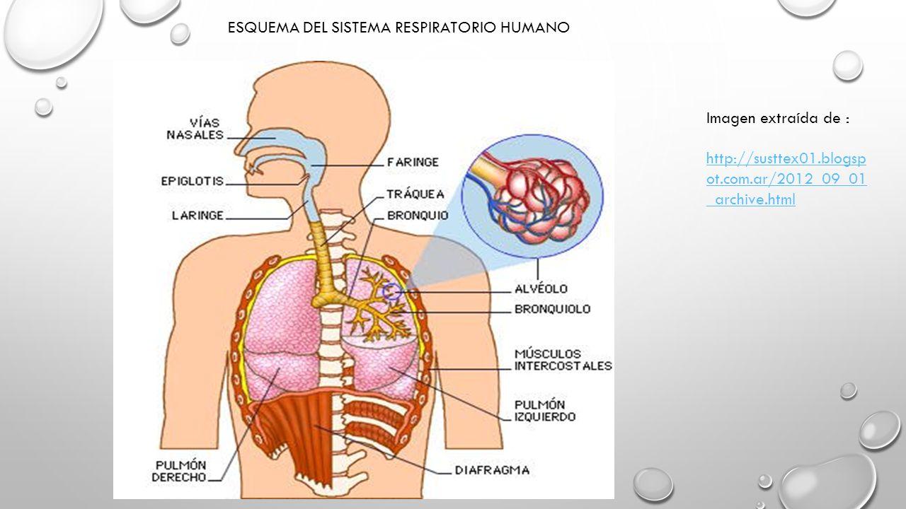 Encantador Diagrama De Marcado Del Sistema Digestivo De Humanos ...