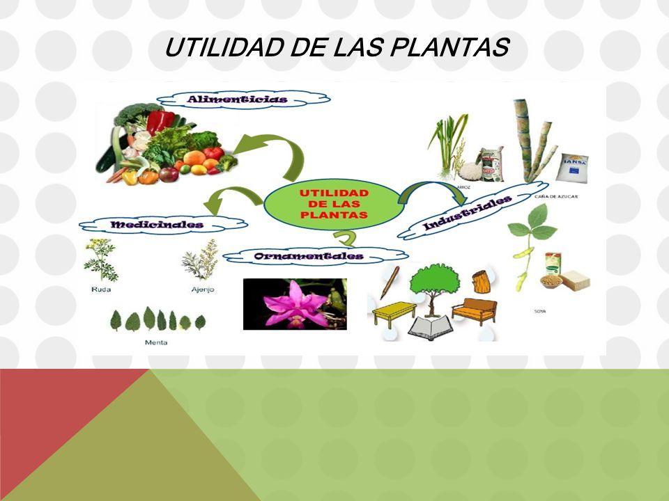 Disfrutemos del maravilloso mundo de la naturaleza ppt for Utilidad de las plantas ornamentales