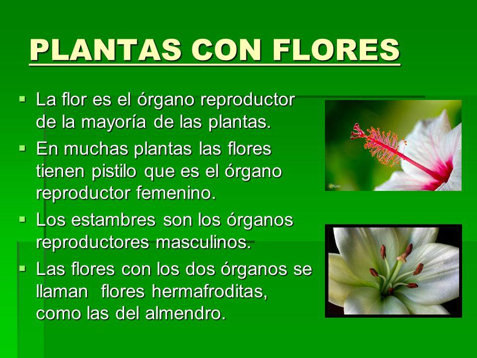 las plantas las plantas luc a gal n torija 5 a luc a gal n ForComo Se Llaman Las Plantas Ornamentales