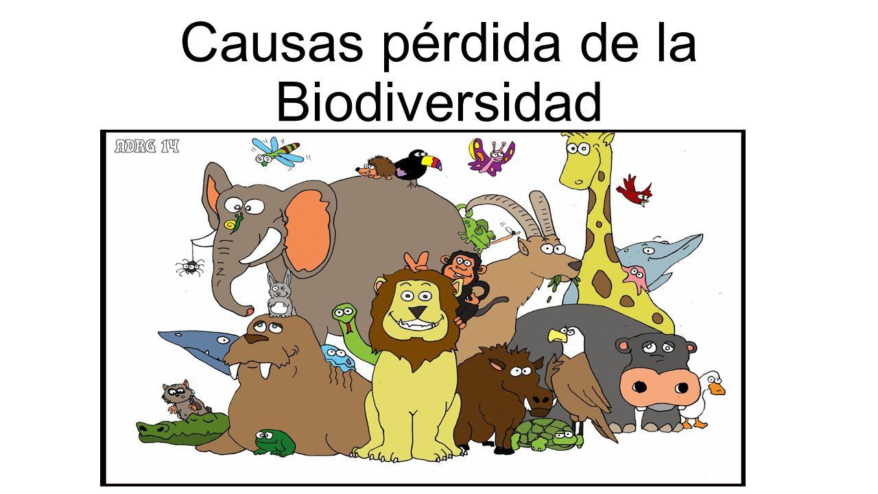 Causas Pérdida De La Biodiversidad