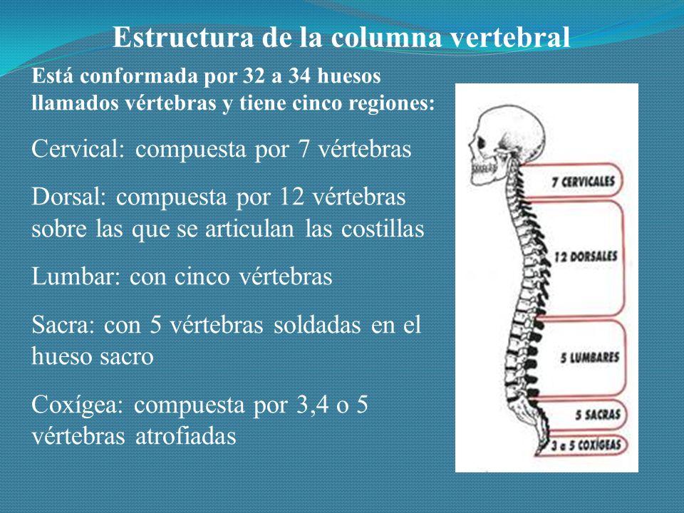 Estructura de la columna vertebral