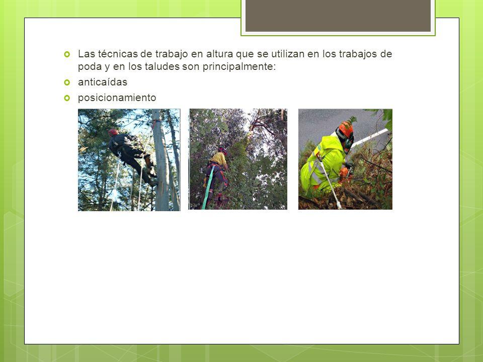 procedimiento para tala de rboles ppt video online