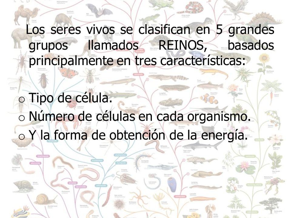 Los seres vivos se clasifican en 5 grandes grupos llamados REINOS, basados principalmente en tres características: