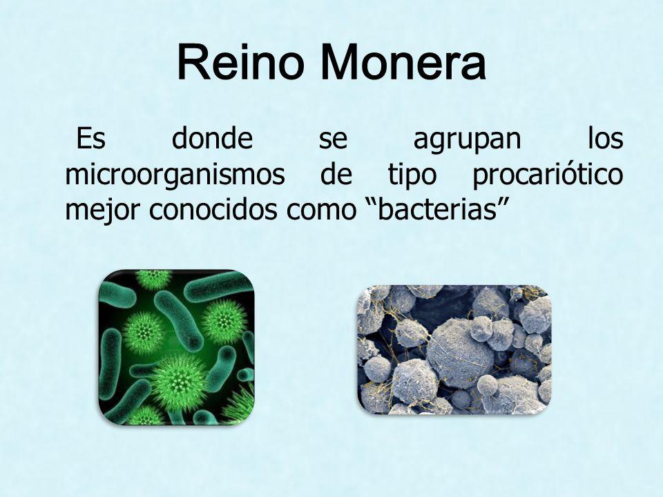 Reino Monera Es donde se agrupan los microorganismos de tipo procariótico mejor conocidos como bacterias