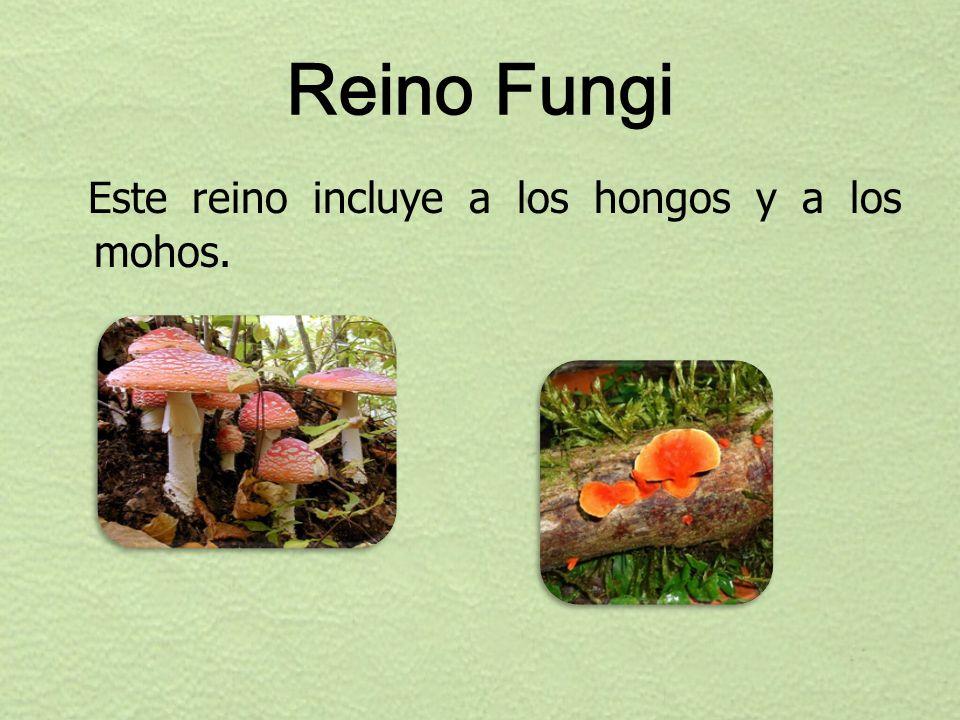 Reino Fungi Este reino incluye a los hongos y a los mohos.