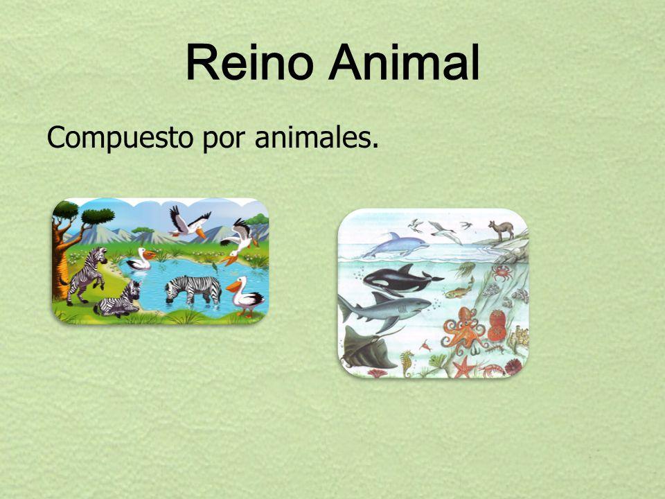 Reino Animal Compuesto por animales.