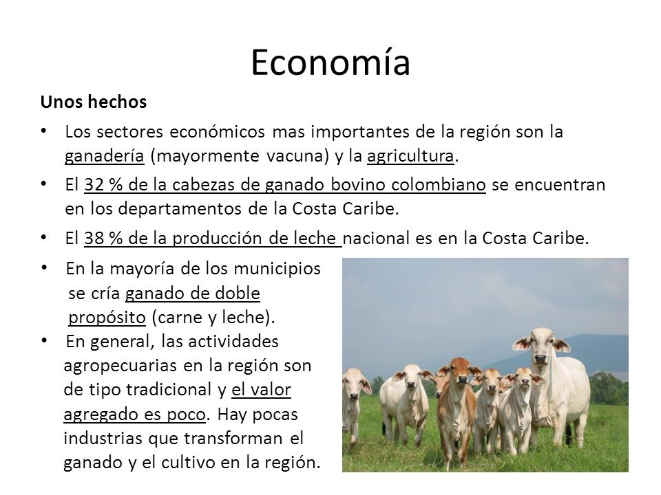Economía Unos hechos. Los sectores económicos mas importantes de la región son la ganadería (mayormente vacuna) y la agricultura.