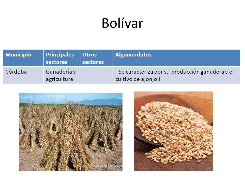 Bolívar Municipio Principales sectores Otros sectores Algunos datos
